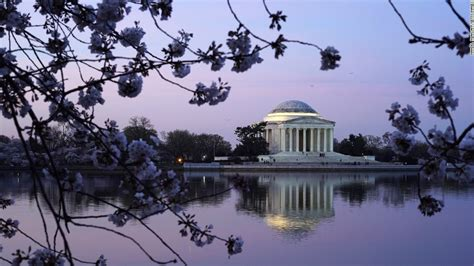 national cherry blossom festival cherry blossoms it s nearly time to head to washington