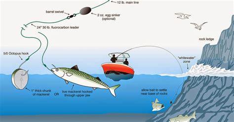 Pancing Standar warta pancing ragam teknik cara memancing laut