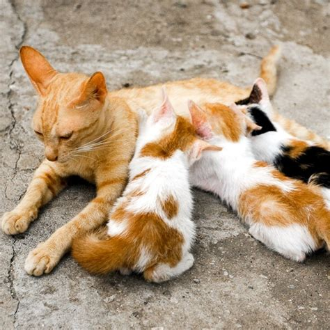 can puppies drink cow milk can kittens drink cow s milk catster