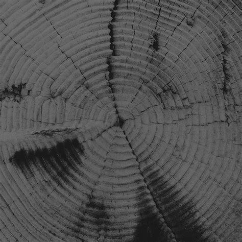 pattern texture dark vj39 old tree texture pattern bw dark
