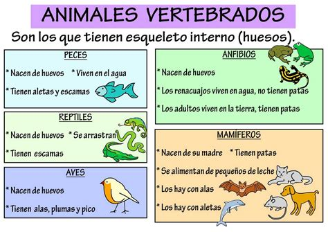 imagenes animales vertebrados e invertebrados para imprimir im 225 genes de animales vertebrados para imprimir material