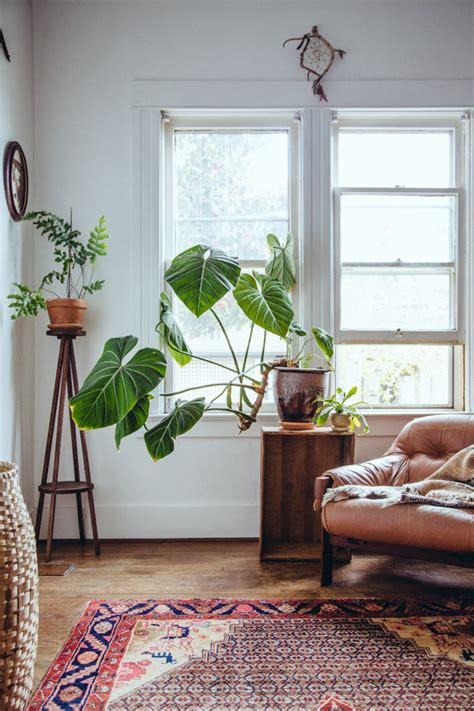 living room plant bursting with plants a 1910 portland foursquare for a