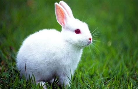 koleksi gambar kelinci lucu terbaru lengkap