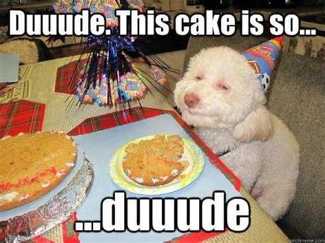 Birthday Cake Dog Meme - birthday dog comment s amuser avec l anniversaire de son
