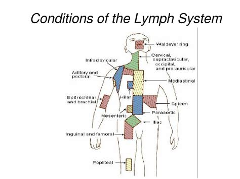 lymph nodes groin diagram swollen glands in groin swollen lymph nodes groin
