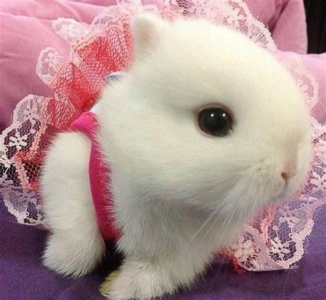 cute rabbit themes best 25 cute baby bunnies ideas on pinterest