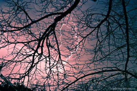 pattern in the nature patterns in nature by jeronimomauregui on deviantart