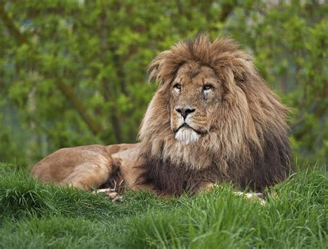 think you where lions live let s explore their habitat