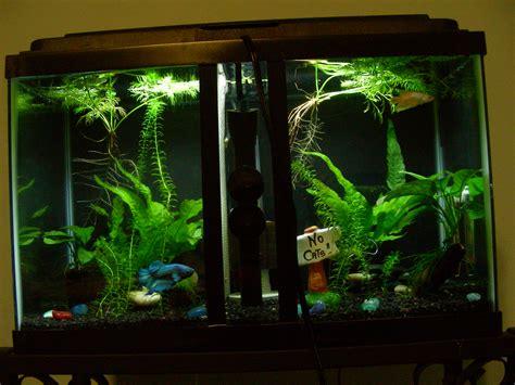 betta tank betta than a bowl betta fish aquariums betta tank