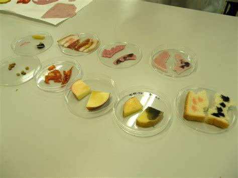 experimentos con alimentos experiencias de ciencias en el ies la coma enero 2011