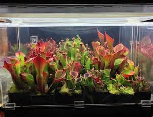 Lighting For Carnivorous Plants Fluorescent Indoor Plant Lighting Icps