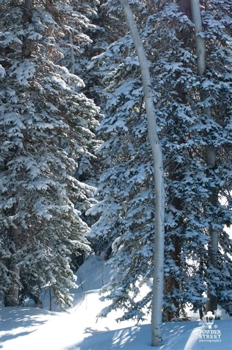 sunlight mountain discount lift  passes liftopia