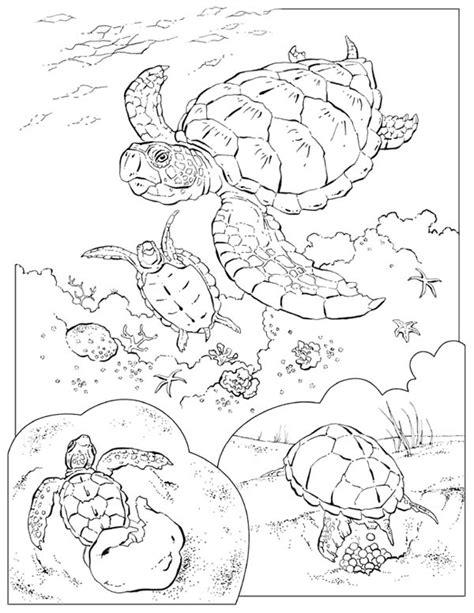 turtle eggs coloring page sea turtle eggs coloring pages coloring pages