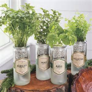 eco planter organic herb kit from park seed