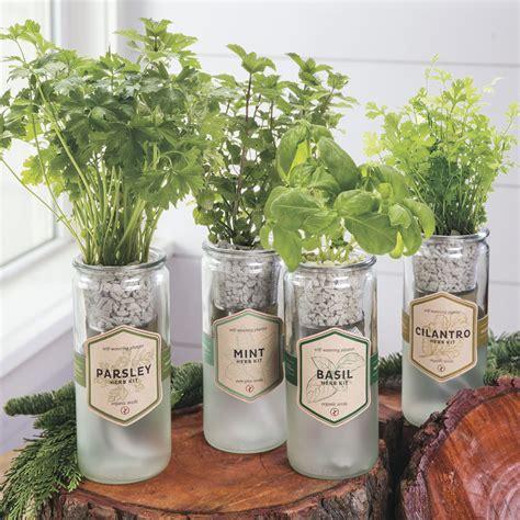herb garden gift ideas herb garden gift ideas herb filled moss basket diy gift