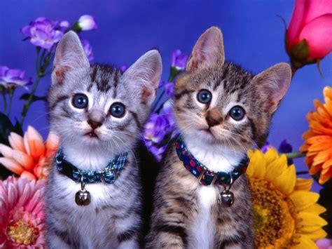 imagenes surrealistas de gatos imagenes de gatos emos animados imagui