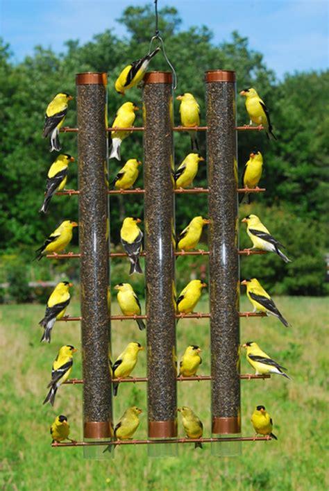 backyard bird feeder 233 best gold finch images on pinterest