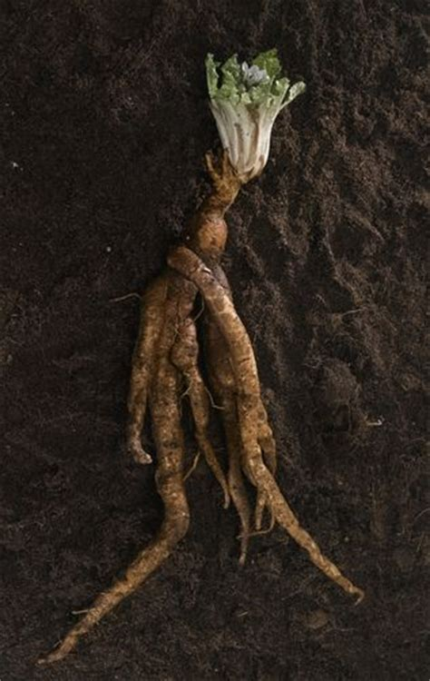 health amulets and the witch on pinterest