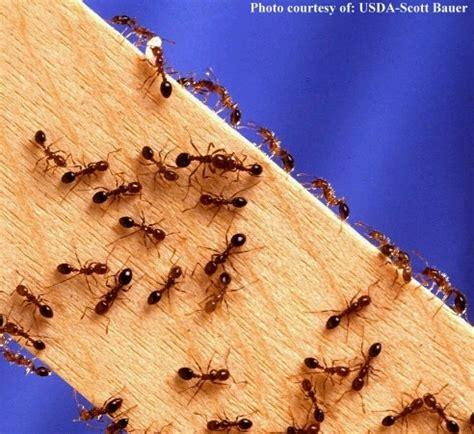 trees hides ants ants everywhere gah