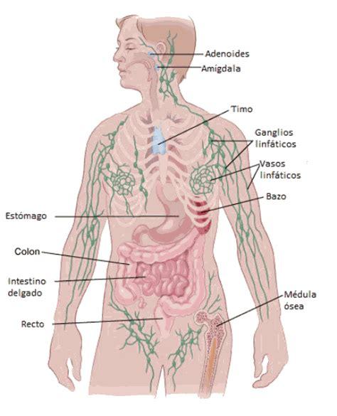 imagenes ganglios ingle 191 qu 233 es el linfoma de hodgkin