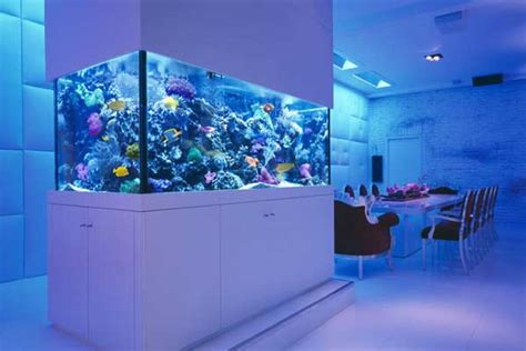 modern aquarium aquarium stands something other than wood reef