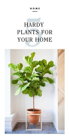 Tips For Fresh Healthy Air In Your Home by For The Home On Benjamin Wall Colors