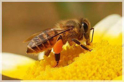 Sarang Madu keajaiban lebah madu dalam al quran reciista21