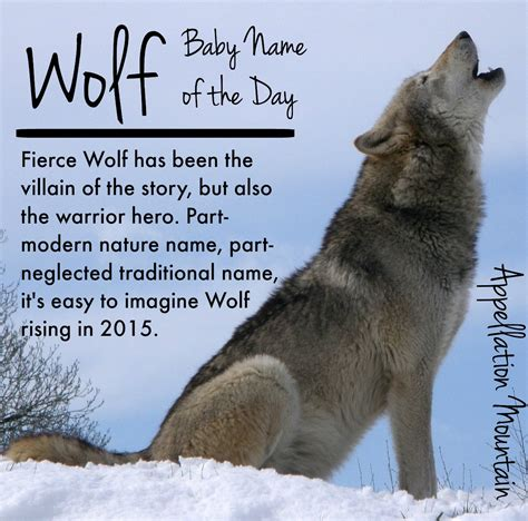 wolf names wolf baby name of the day appellation mountain