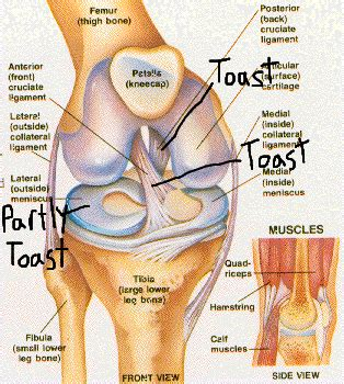 parts of knee diagram here we go again after knee surgery