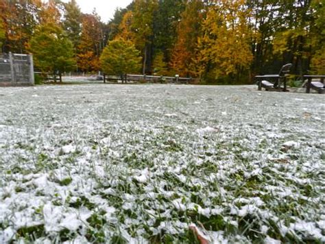 winter lawn care lawn care in winter