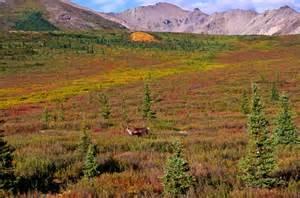 The Interior Plains Vegetation R 233 Sultats Google Recherche D Images Correspondant 224 Http