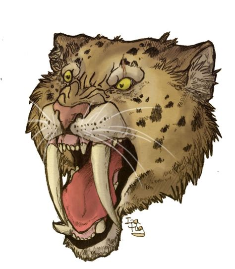 saber tooth tiger tattoo 46 best sabertooth tiger drawings images on