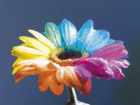 fiori bellissimi foto fiori a 2 colori focusjunior it