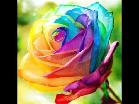 Beautiful Flower Dan Custom Nama beautiful flowers reuun