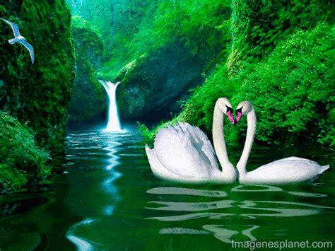 imagenes hermosas en movimiento angel cerritos google