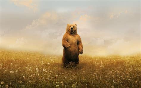 Большая панда картинки для детей