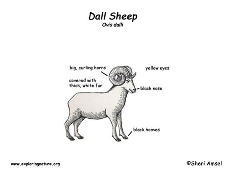 sheep diagram sheep parts diagram images