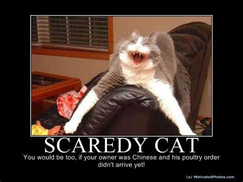 Scared Cat Meme - the best demotivational posters part 5 damn cool pictures
