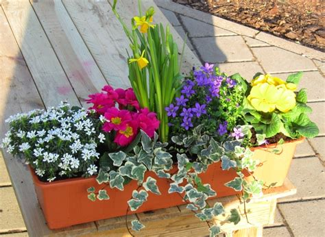 winterharte balkonpflanzen bilder bepflanzter fr 252 hlings balkonkasten bunt in 3 gr 246 223 en