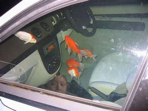 Fisch Auf Auto by Car Fish Aquarium Xcitefun Net