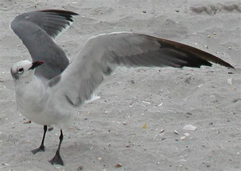 wings i wing wikipedia