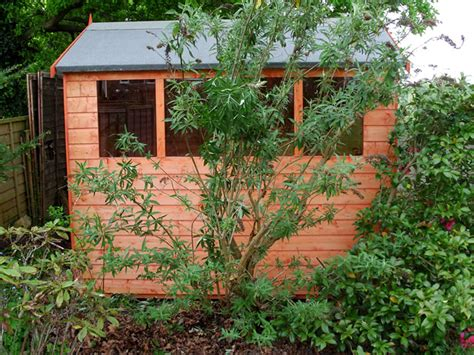 shed installation cousins conservatories garden buildings 8 x 6 apex