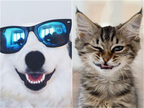 imagenes animales grasiosos gifs de animales graciosos todo mascotas