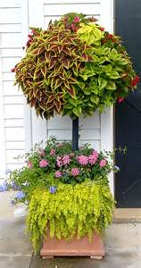 flowers for container gardening gardening tips for beginners container gardening