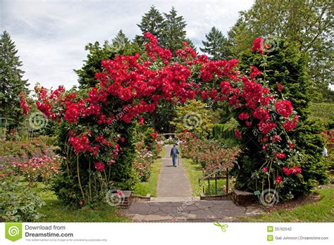 the rose test garden stock photography image 25762042