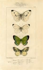 butterfly prints free history printable image moths butterflies