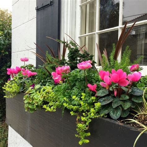 winter window box plants 17 best images about window boxes on hakone