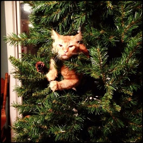 repel cat christmas tree cats and trees fuzzfeed