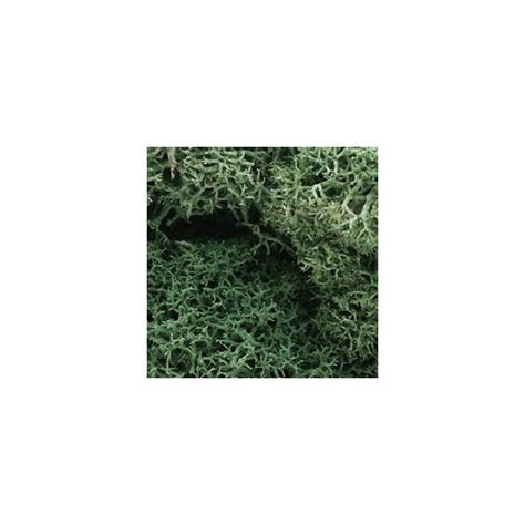 lichen light green free cdn shipping available
