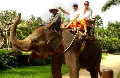 bali elephant ride tour elephant ride mr bali tour bali adventure tours